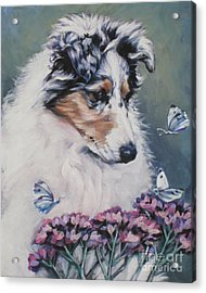 Blue Merle Collie Pup Acrylic Print by Lee Ann Shepard