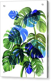 Blue Monstera Acrylic Print by Ana Martinez