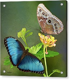 Blue Morpho  Butterflies Acrylic Print