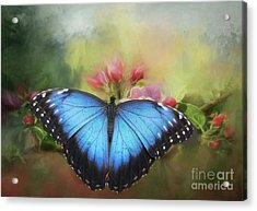 Acrylic Print featuring the photograph Blue Morpho On A Blossom by Eva Lechner