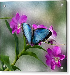 Blue Morpho With Orchids Acrylic Print