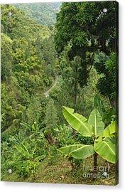 Blue Mountain Coffee Grows Where? Acrylic Print