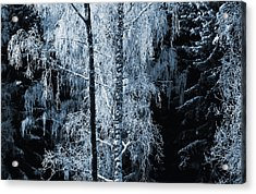 Blue Nature Winter Scenery Acrylic Print