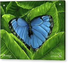 Blue Night Butterfly Acrylic Print by Maria Williams
