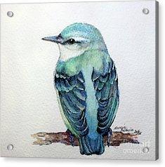 Blue Nuthatch Acrylic Print