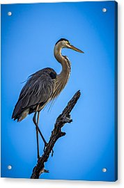 Blue On Blue Acrylic Print by Marvin Spates