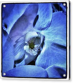 Acrylic Print featuring the photograph Blue Orchids. They Represent Strength by Mr Photojimsf