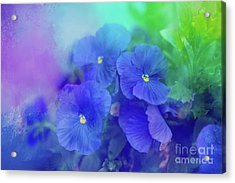 Blue Pansies Acrylic Print by Eva Lechner