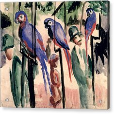 Blue Parrots Acrylic Print by August Macke