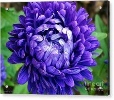 Blue Petals Acrylic Print
