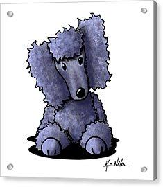 Blue Poodle Acrylic Print by Kim Niles