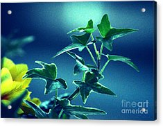 Acrylic Print featuring the photograph Blue Power  by Susanne Van Hulst