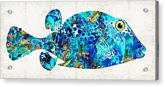 Blue Puffer Fish Art By Sharon Cummings Acrylic Print by Sharon Cummings