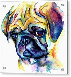 Blue Pug Acrylic Print by Christy  Freeman