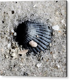 Blue Purple Ribbed Sea Shell Macro Buried In Fine Wet Sand Square Format Watercolor Digital Art Acrylic Print by Shawn O'Brien