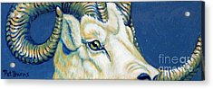 Blue Ram Acrylic Print by Pat Burns