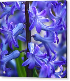 Acrylic Print featuring the photograph Blue Rhapsody by Byron Varvarigos