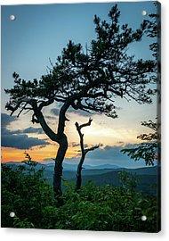 Blue Ridge Mountains Dr. Tree Acrylic Print