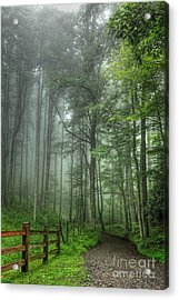 Blue Ridge - Trees In Fog Country Road I Acrylic Print by Dan Carmichael