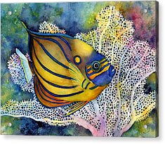 Blue Ring Angelfish Acrylic Print by Hailey E Herrera
