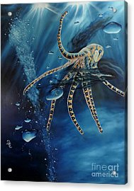 Blue Ring Octopus Acrylic Print