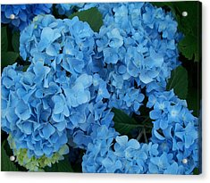 Blue Acrylic Print by Rosanne Bartlett