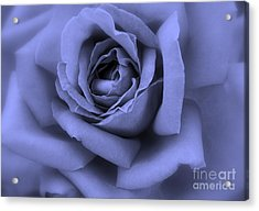 Blue Rose Abstract Acrylic Print by Carol Groenen