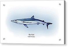 Blue Shark  Acrylic Print by Ralph Martens