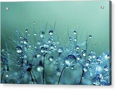 Blue Shower Acrylic Print by Sharon Johnstone