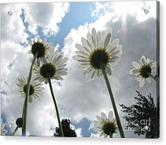 Blue Skies Acrylic Print by Misha Bean