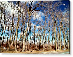 Acrylic Print featuring the photograph Blue Sky And Trees by Valentino Visentini