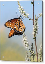 Acrylic Print featuring the photograph Blue Sky Dancer  by Julie Andel