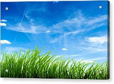 Blue Sky Green Grass Acrylic Print