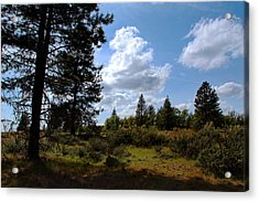 Acrylic Print featuring the photograph Blue Sky by Joanne Coyle