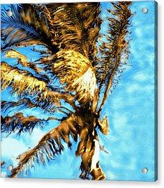 Blue Sky Palm Acrylic Print by Paul Tokarski