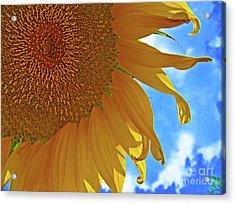Blue Sky Sunflower Acrylic Print
