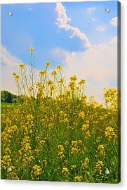 Blue Sky Yellow Flowers Acrylic Print by Bill Cannon