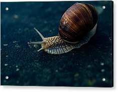 Blue Snail Acrylic Print by Pati Photography