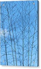 Blue Standing Acrylic Print