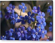 Blue Sterner Acrylic Print
