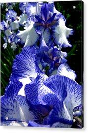 Blue Streak Acrylic Print by Scott Hovind