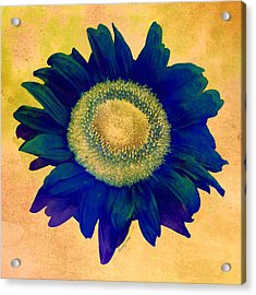 Blue Sunflower Acrylic Print by Stacey Chiew