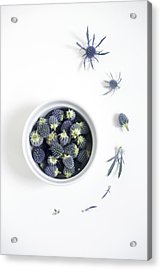 Blue Thistle Still Life Acrylic Print
