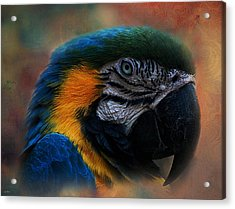 Blue Throated Macaw 003 Acrylic Print