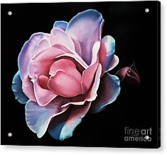 Blue Tipped Rose Acrylic Print