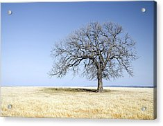 Blue To Remember Acrylic Print