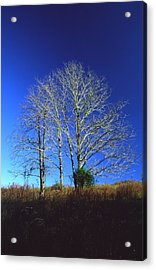 Blue Tree In Tennessee Acrylic Print