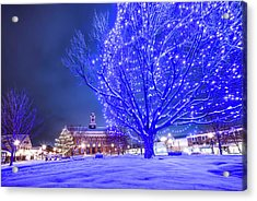 Blue Tree - The Final Year Acrylic Print