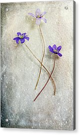 Blue Trio Acrylic Print by Randi Grace Nilsberg