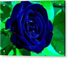 Blue Velvet Rose Acrylic Print by Samantha Thome